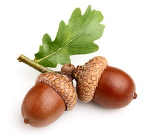 You can learn a lot from an acorn.